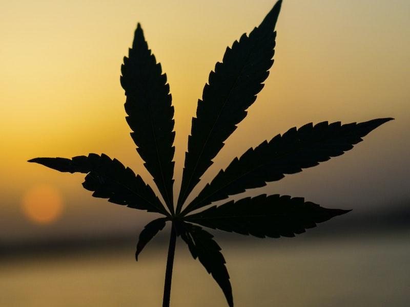 Cultivo colectivo de cannabis en Latinoamérica: un modelo de negocio en expansión