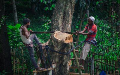 Neutralizar gases de carbono no es prioridad de Latinoamérica por sus bajas emisiones